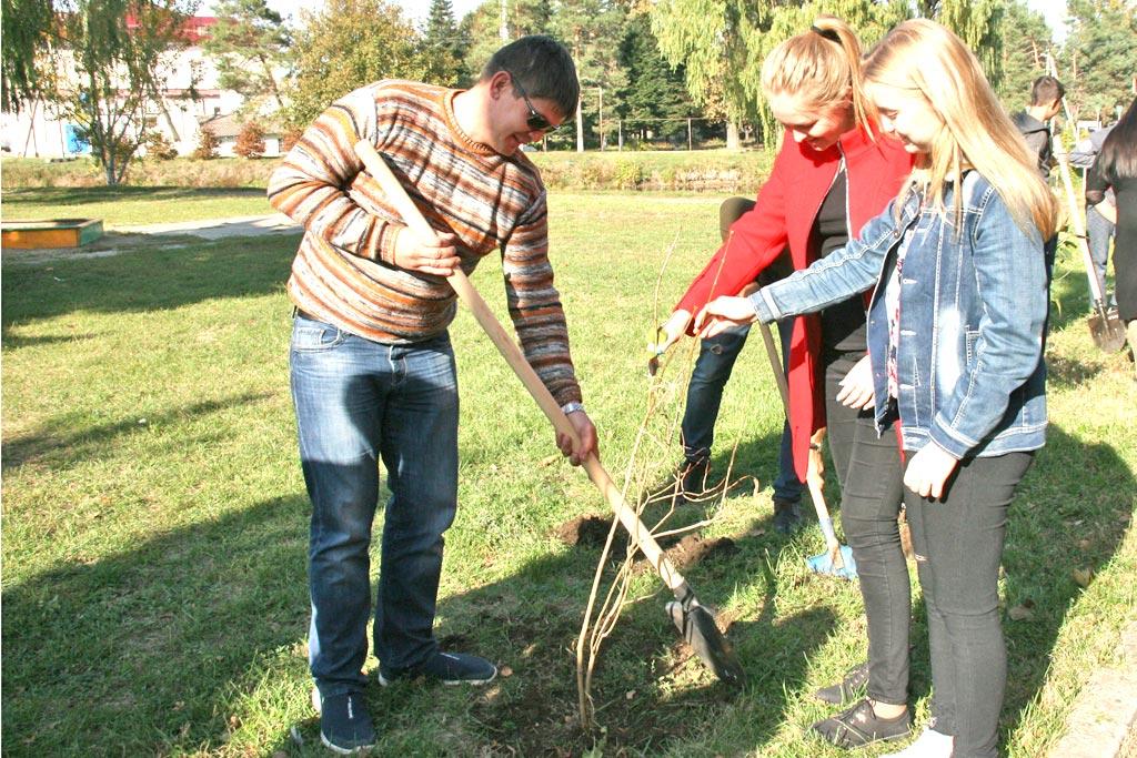 В посадке деревьев приняли участие молодые депутаты района и волонтеры-школьники